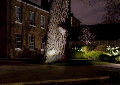 HighRes-Big tree