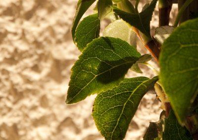 HighRes-Leaves