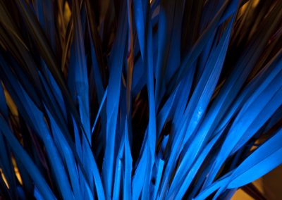 HighRes-bluereed