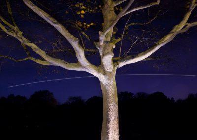 HighRes-tree